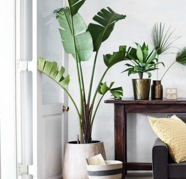 Indoor Plants: aesthetically enhance and purify your home