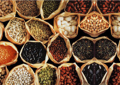 The Best Protein Sources – Animal + Plant Based!